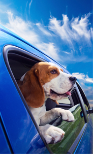 buying a pet friendly car