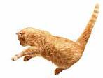 CatJumping
