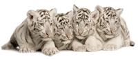 TigerPack