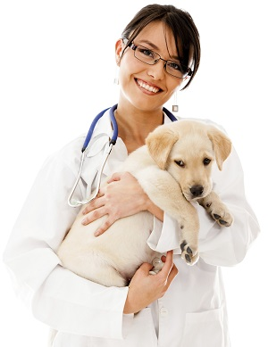 Veterinarian Payment Plan