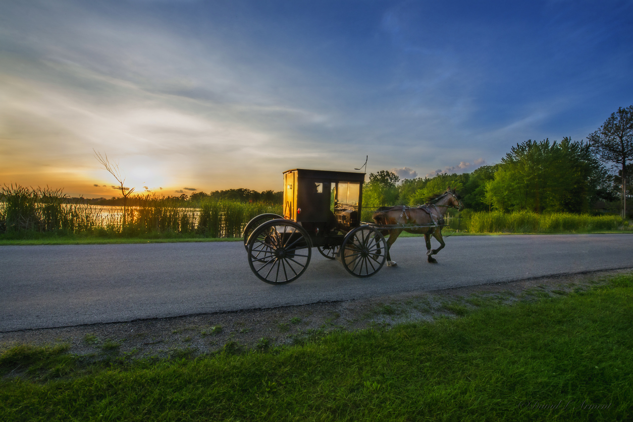 Amish buggy sunset