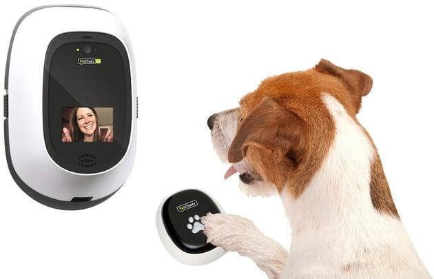 veterinary technology