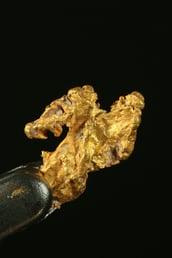 gold nugget.jpg