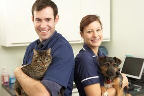 veterinary hospitals