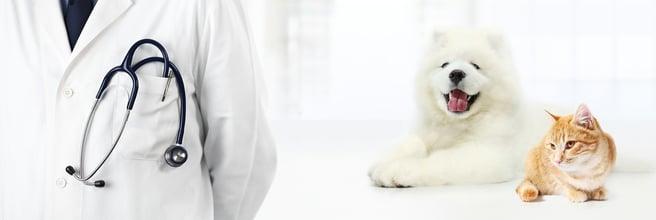 veterinary education