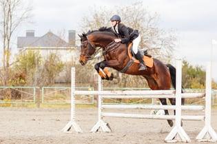 tack shops- horse jumping.jpg