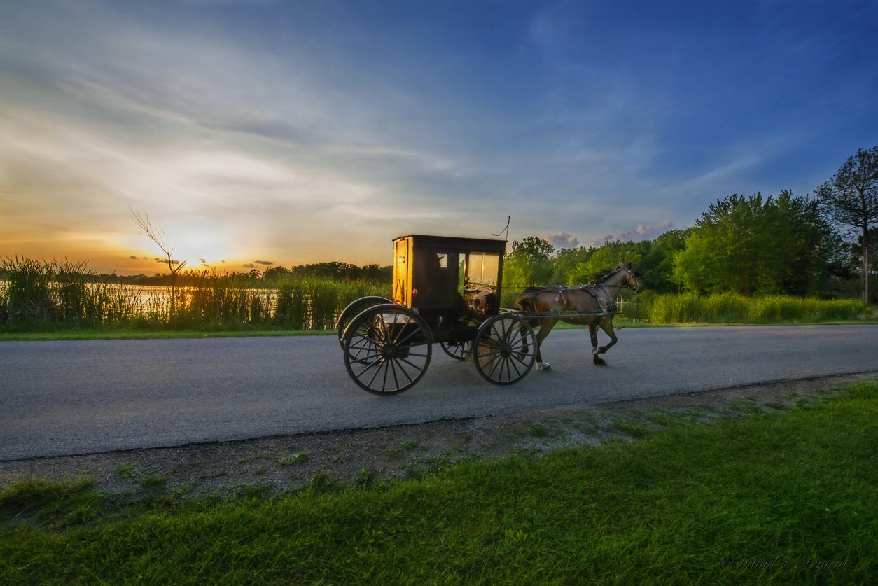 Amish buggy sunset